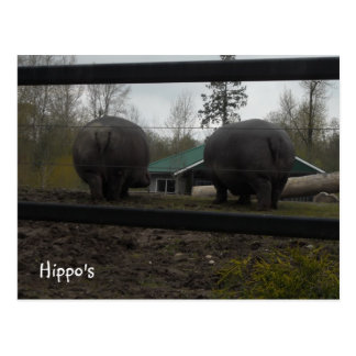 Funny Hippopotamuses Walking Away Postcard