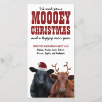 Funny Holiday Cow Couple Mooey Christmas