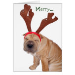 Funny Holiday Greetings from the Dog Greeting Cards