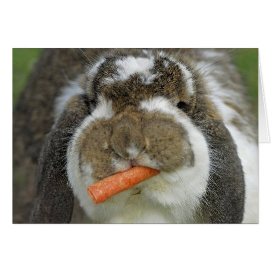 Funny Holland Lop Bunny Rabbit Eating Carrot Card