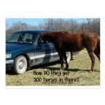 "Funny Horse ""300 Horse"" Postcard"