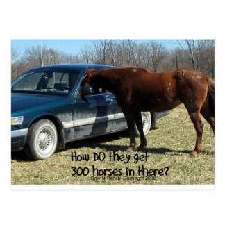 "Funny Horse ""300 Horse"" Post Card"