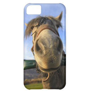 Funny Horse Cover For iPhone 5C