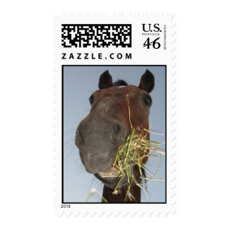 funny horse eating stamp