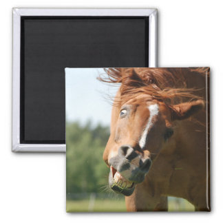 Funny Horse Face with Curled Lips, Crazy Eye Magnets