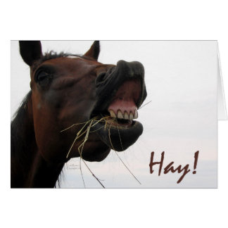 Funny Horse: Hay! Greeting Card
