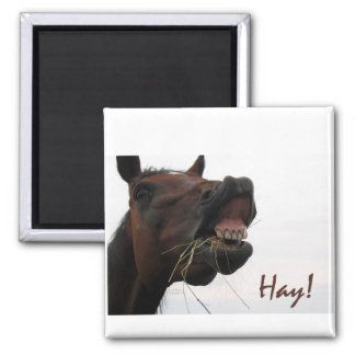 Funny Horse: Hay! Magnet