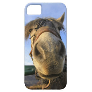 Funny Horse iPhone SE/5/5s Case