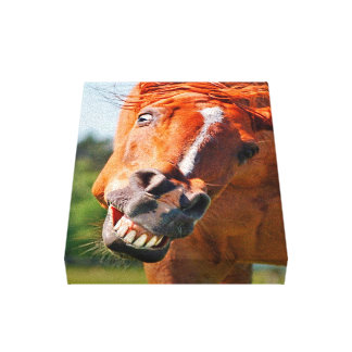 Funny Horse Laughing Photograph Canvas Print