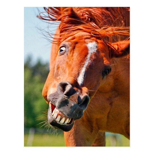 Funny Horse Laughing Photograph Postcard | Zazzle.com