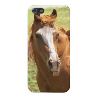 Funny Horse Photo Sticking Tongue Out Animal Photo Cover For iPhone SE/5/5s