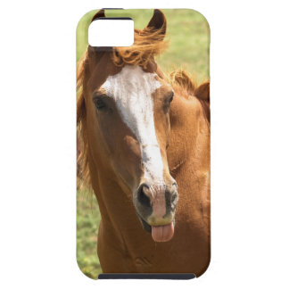 Funny Horse Photo Sticking Tongue Out Animal Photo iPhone SE/5/5s Case