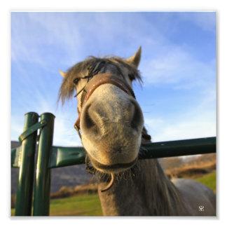 Funny Horse Photo Art