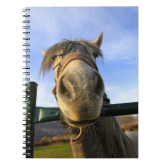 Funny Horse Spiral Notebook