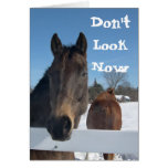 Funny Horses in Winter Birthday Card Template