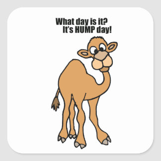 Funny Hump Day Camel Art Stickers