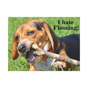 5c733847e40c Funny I Hate Flossing Beagle Chewing On A Stick Canvas Print