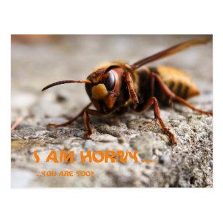 Funny insect hornet slogan postcard postal