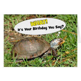 Funny Its Your Birthday Box Turtle 5 x 7 Card