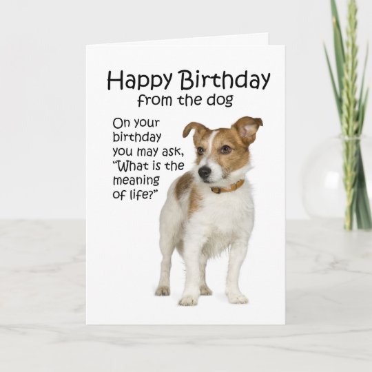 Funny Jack Russell Terrier Birthday Card Zazzle