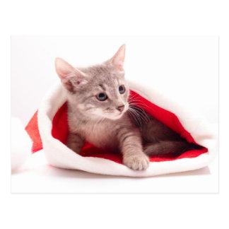 Funny kitten a cap of Santa Claus Postcard