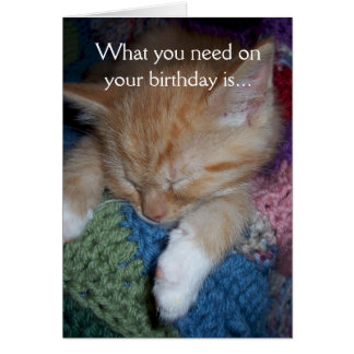 Funny Kitten Birthday Greeting Card