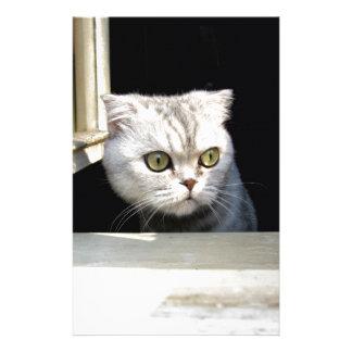 Funny Kitten Stationery