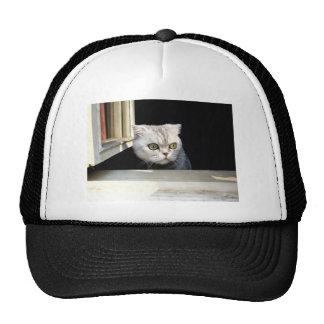 Funny Kitten Trucker Hat