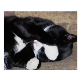 Funny Kitty Catching Z's Oil Painting Poster