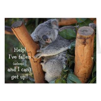 Funny Koala Bear, Belated Birthday Card