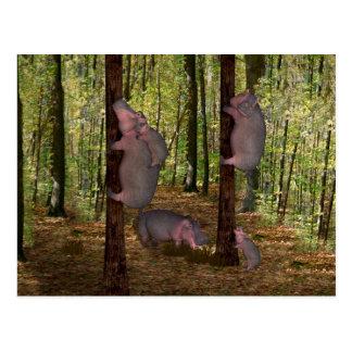 Funny Koala-Wannabe Hippos Postcard