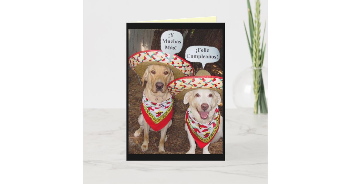 Best Funny Birthday Cards In Spanish Image Collection
