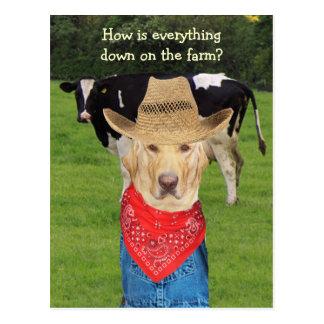 Funny Lab Dairy Farmer Postcard
