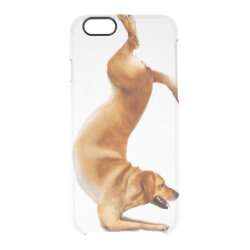 Uncommon iPhone 6 Clearly™ Deflector Case with Golden Retriever Phone Cases design
