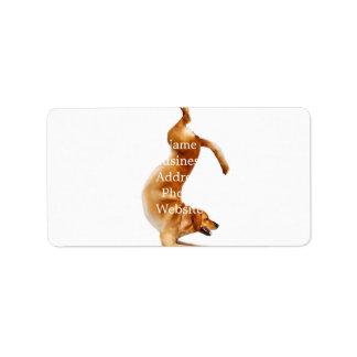 funny labrador - dog yoga - golden retriever label