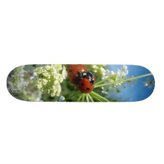 funny ladybug luck at love playing in spring skateboard deck