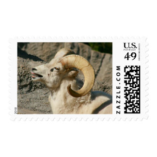 Funny Laughing Bighorn Sheep or Ram Postage