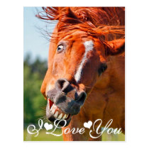 Funny Laughing Horse I Love You Postcard