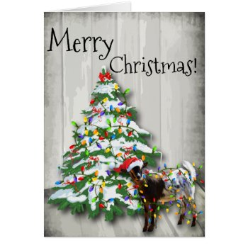 Funny Little Christmas Goat Card