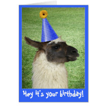 Funny Llama birthday card or invitation