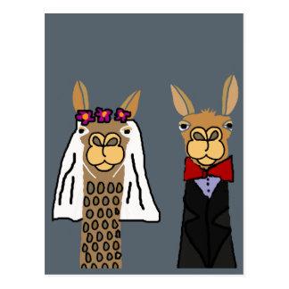 Funny Llama Bride and Groom Wedding Art Postcard