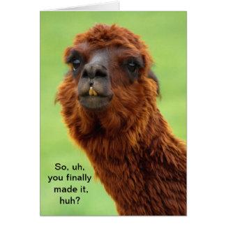 Funny Llama Graduation Card