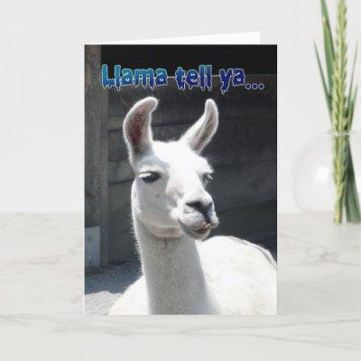 Funny Llama Happy Birthday Greeting Card from Zazzle.co