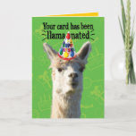 Funny Llama With Party Hat– Llamanated Birthday Card