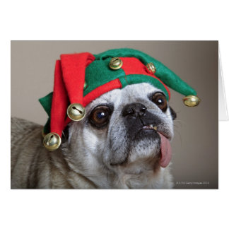 Funny looking pug with tongue hanging out greeting card