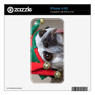 Funny looking pug with tongue hanging out iPhone 4 skins
