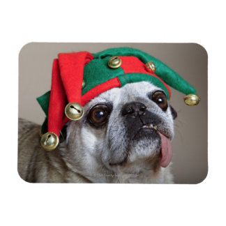 Funny looking pug with tongue hanging out magnet