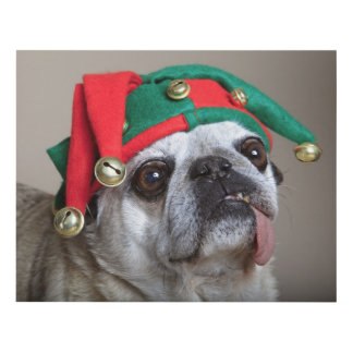 Funny looking pug with tongue hanging out panel wall art