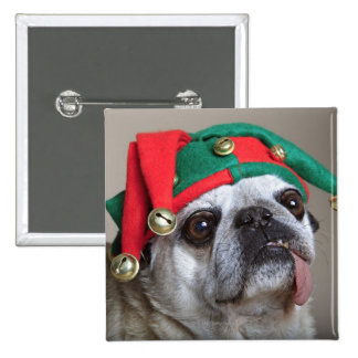 Funny looking pug with tongue hanging out pinback button
