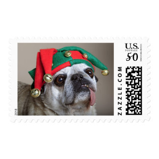 Funny looking pug with tongue hanging out postage